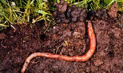 Zorg voor uw bodem en de bodem zorgt voor uw planten!