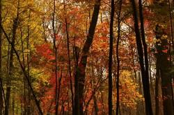 Hoe komt de herfstverkleuring tot stand?