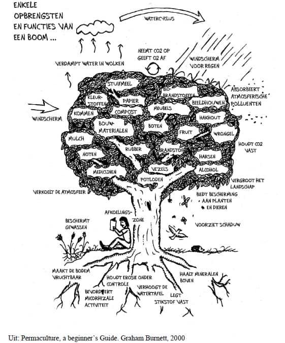 Enkele opbrengsten en functies van een boom!