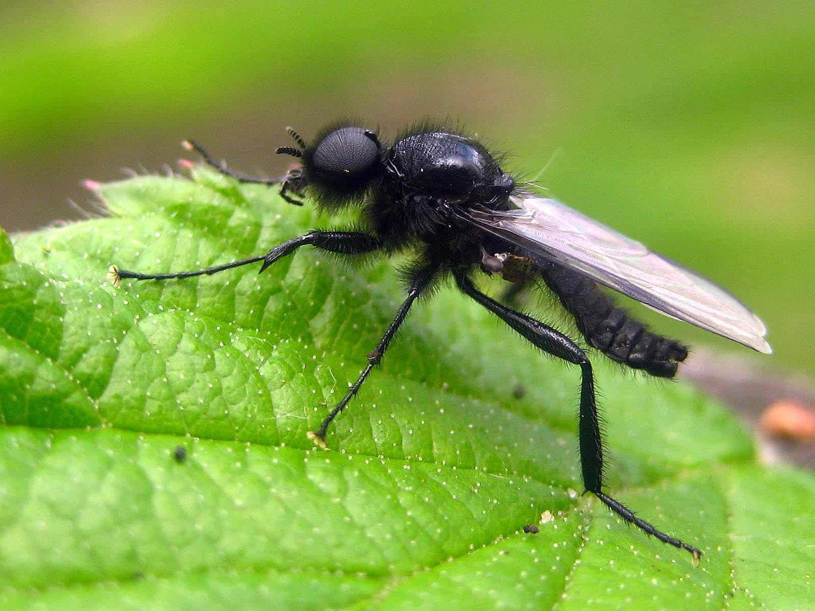 Het was gisteren een leerzame dag blog natuurlijke moestuin for Vliegen in de tuin