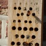 Wordt Zelf Imker en Help de Bijen