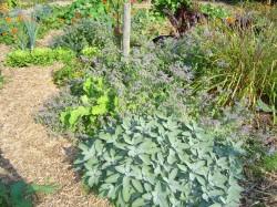 Minstens 8 Voordelen van Kruiden in de Groentetuin!