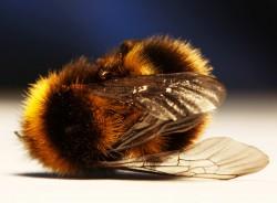 Zijn de Problemen met Onze Bijen Voorbij?