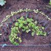 Groenten Kweken in Compost Zonder Problemen