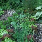 Winterlezing: Praktische toepassing van permacultuur in de tuin