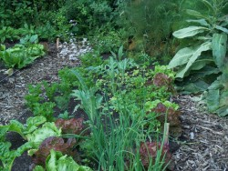 Vier Essentiële Zaken voor Gegarandeerd Succes in Je Natuurlijke Tuin!