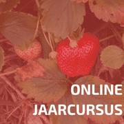 Online Jaarcursus