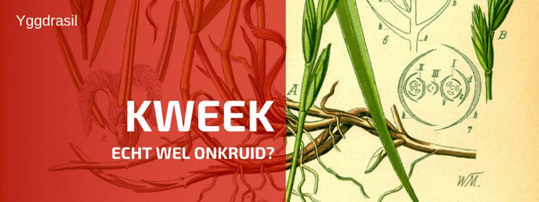 Plantbespreking: Kweek (Elytrigia repens L.)