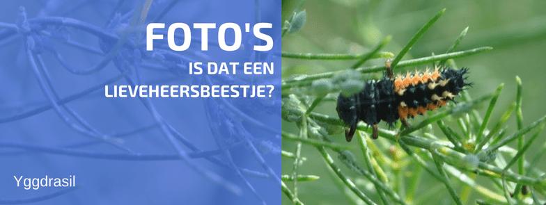 Foto's Van Het Zevenstippelig LieveHeersbeestje