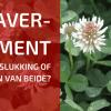 Ons Experiment met Klaver Als Mulch: Een Eindevaluatie