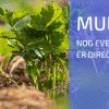 Mulchen in het Voorjaar: Wachten of Direct Starten?