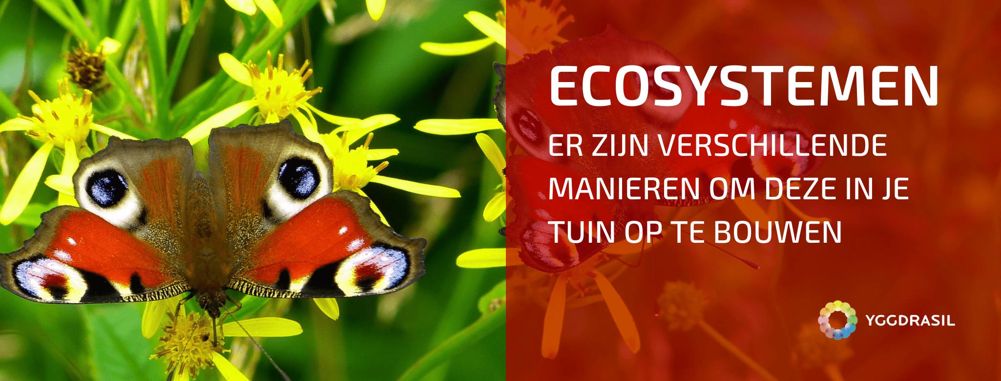 Verschillende Manieren Om een Ecosysteem Op Te Bouwen