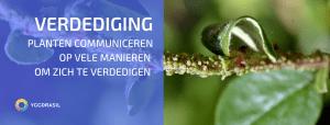 Planten Communiceren Als Onderdeel Van Hun Verdediging