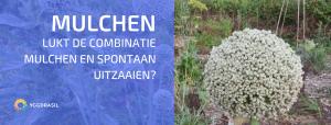 Mulchen en Spontaan Opkomende Planten