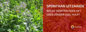 Welke Spontane Zaailingen Vind Je in Onze Tuin?