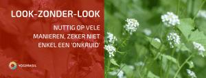 Plantbespreking: Look-zonder-look (Alliaria petiolata)