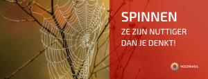 Spinnen Leven Vooral in de Herfst?